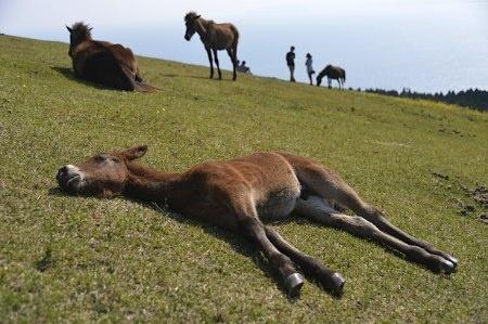 寝る子馬は育つ