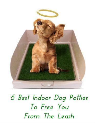 17 best images about basset hound on pinterest doggie for Indoor dog bathroom solutions