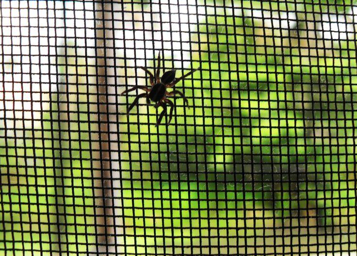 Paragon of Web.