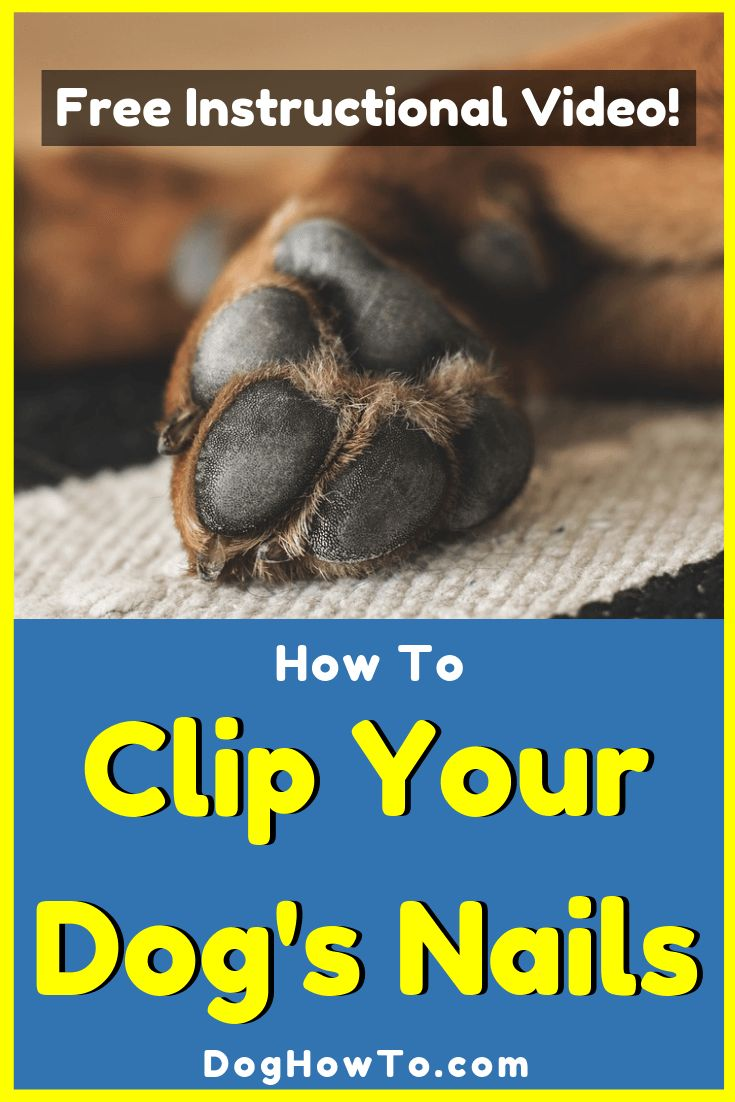 How to clip your dogs nails dog nails trimming dog