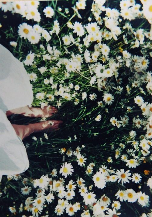 A blanket of daisies in my toes on tepid summer day...so tepid that the air smells of daisy roots. K.W.