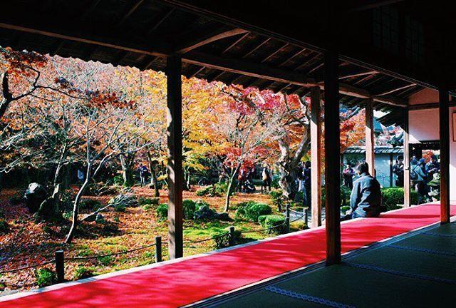 * 就算是平日這時候的京都一樣到處都是遊客,拍照時很難躲掉人群... * #日本 #関西 #關西 #京都 #圓光寺 #旅行 #Japan #Kansai #Kyoto #trip #travel #ig_asia #ig_Japan #instaJapan #vsco #VSCOcam #vscolife #vscocamphotos #team_jp_ #ig_nippon #igersjp #instagramjapan #icu_japan #紅葉 #🍁