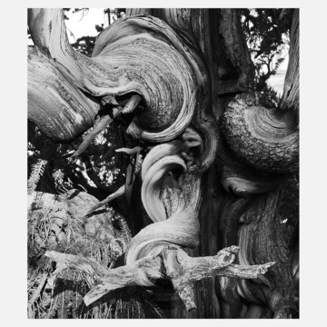 Andrew Quist photography Bristlecone detail: 16X20 Art, Bristlecon Details, Photography Bristlecon, Trees Photography, Art Photography, Andrew Quist, Quist Photography, Beautiful Pictures, American Beautiful