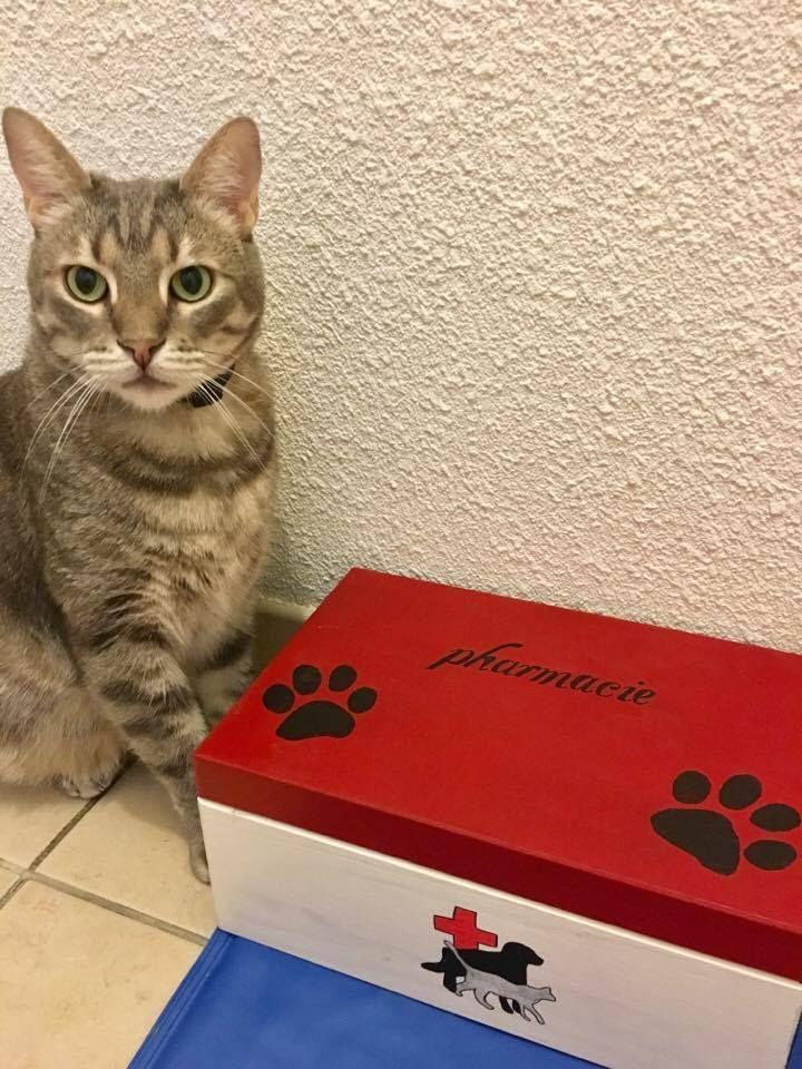 le contenu d'une trousse de secours parfaite pour chien et chat + en bonus pharmacie naturelle