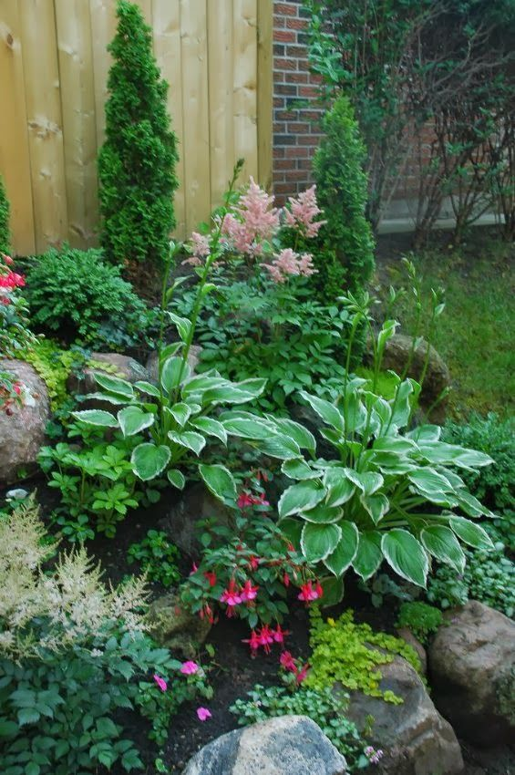 Small shade garden, Astilbes, fuchsias, hostas, creeping jenny