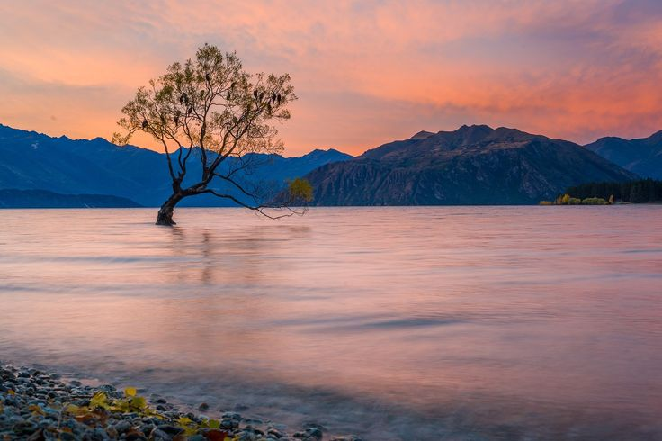 The 'Wanaka Tree' is one of the most photographed places in New Zealand. It's easy to see why. #NewZealandwalkingtours #WalkingNewZealand #NewZealandVacations #wanakatree