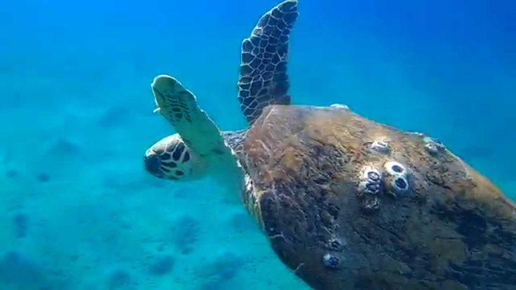 marsa alam diving ,Denver act 5002 underwater Turtle in marsalam abu dabbab