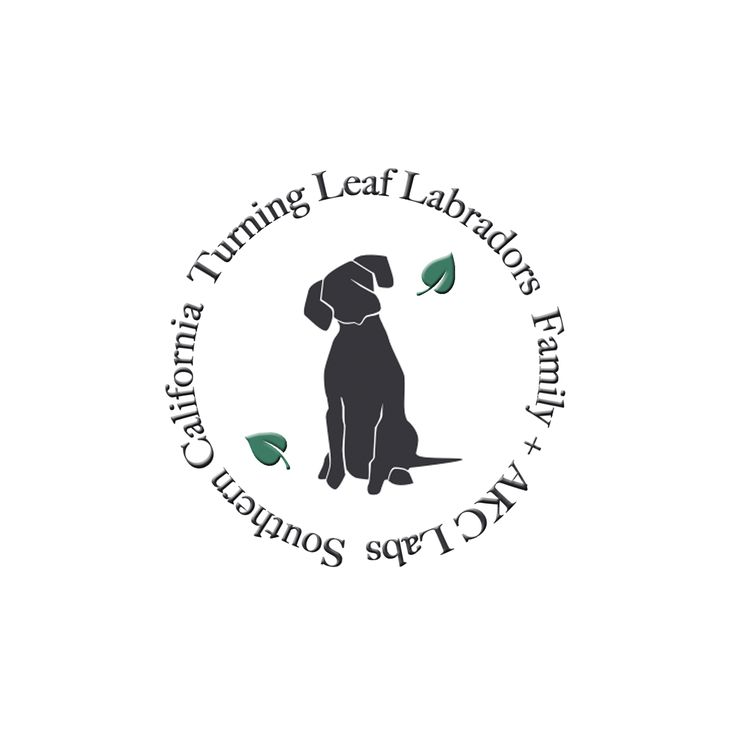 Turning Leaf Labradors is a Marine Corps family owned + operated Labrador breeding program located in southern California | Chocolate Labs | Silver Labs | Silver Factored Labs | Lab Puppies | AKC Labs | Labs for Sale in California