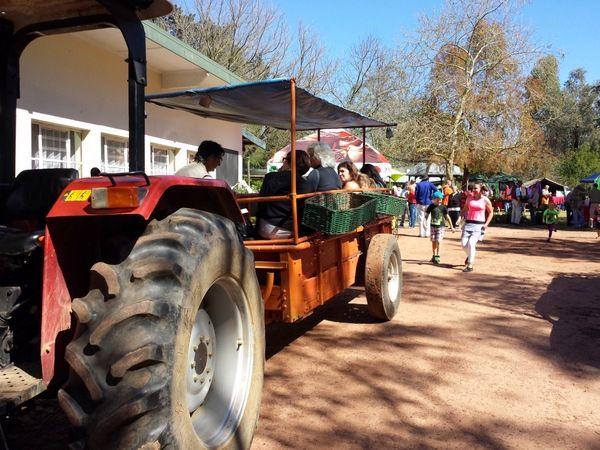 Camphill market tractor rides - children running to get on board for the next ride around the village.