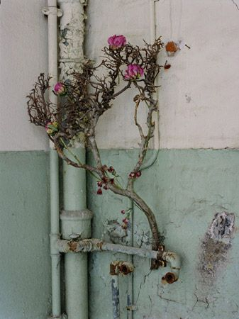 I like this photograph as it captures nature almost reclaiming its space.