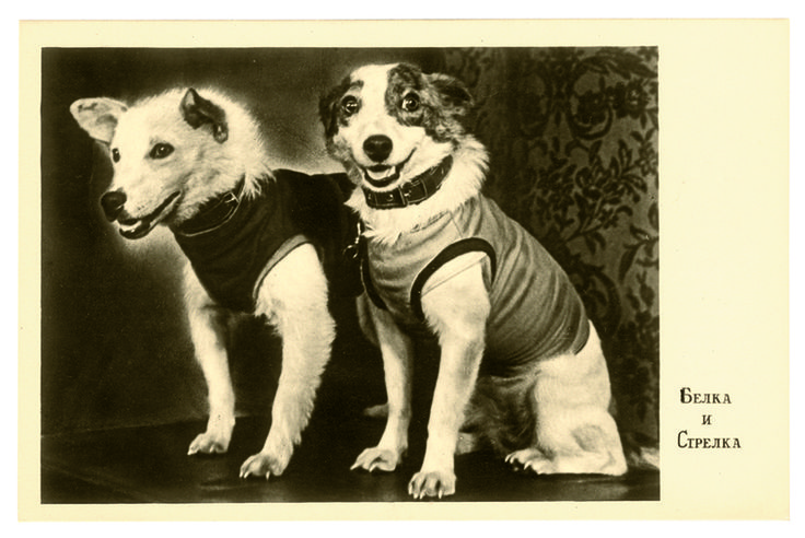 A postcard featuring a photograph taken at the Belka and Strelka's first press conference, 1960.(Photo:© FUEL Publishing)