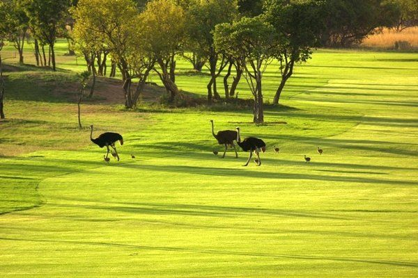 Elements Private Golf Reserve | Limpopo Golf Courses