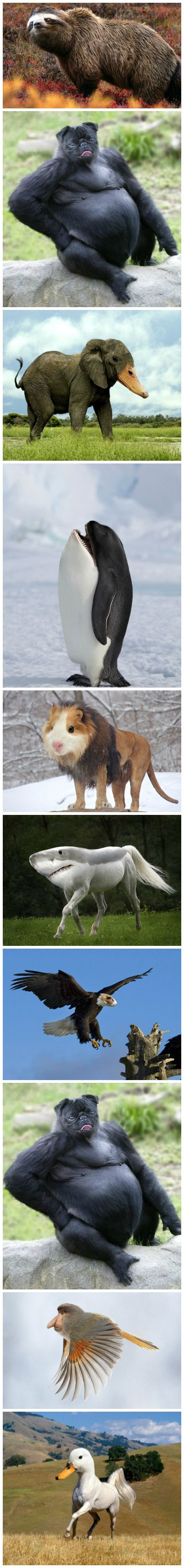 Crazy animal mashups - the dog and killer whale are the best!