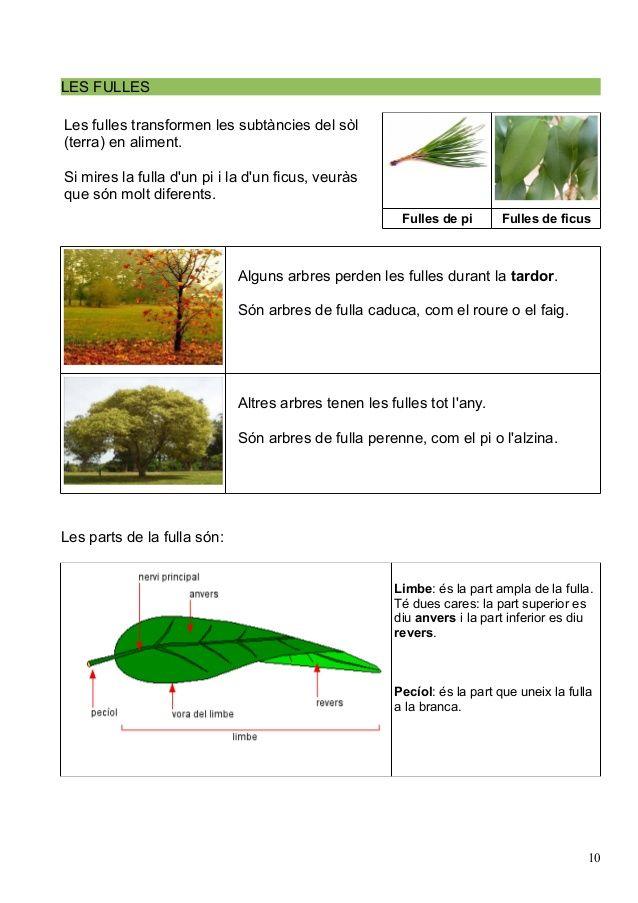 Les Plantes Parts Cicle De La Vida Herbs Nature Parsley