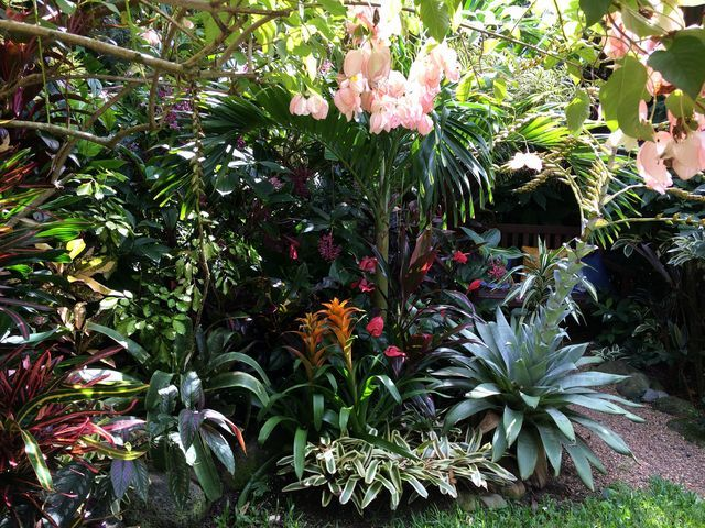 Garden Ideas Tropical 1294 best gardens: tropical images on pinterest | tropical garden
