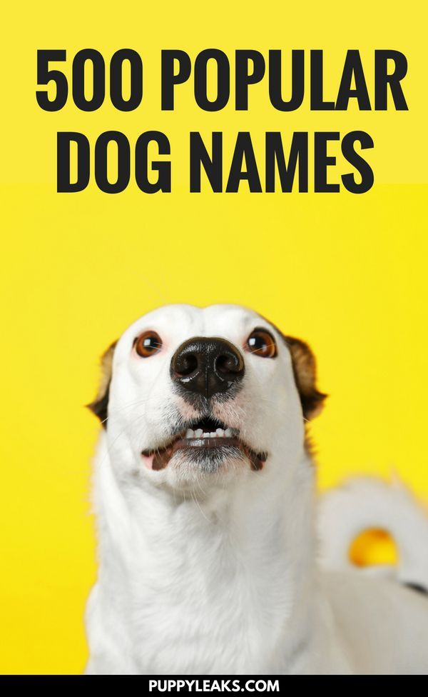 500 Of The Most Popular Dog Names Pet Blogger Support Group Dog