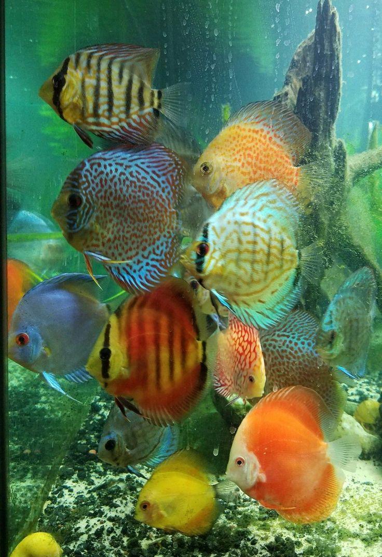 Fish Aquarium Set Up