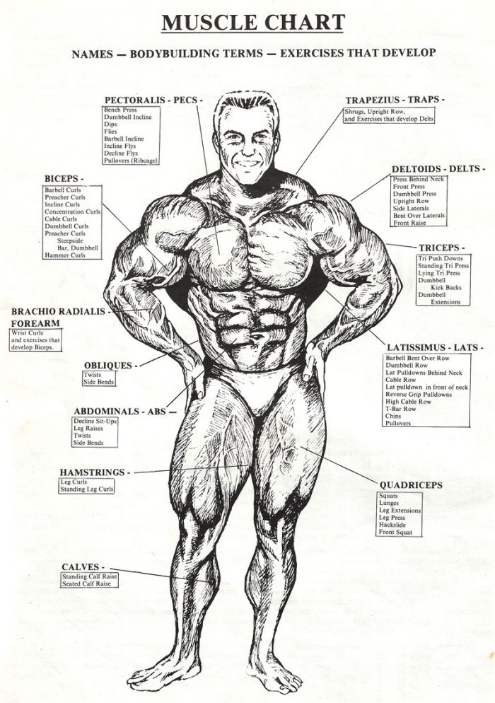 14 best Muscle images on Pinterest | Exercise workouts, Fitness ...