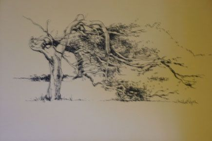 Sketch of a leaning tree at Greenough.