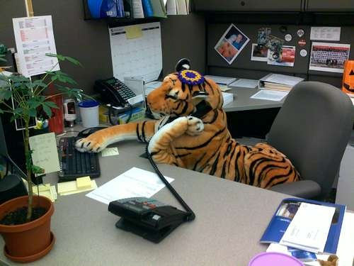 62 best cubicle humor images on pinterest cubicle humor for Cool stuff for your cubicle