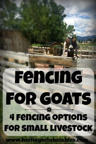 Fencing for Goats: One of the four options may just be the perfect solution for you and your goats! Check out your options!