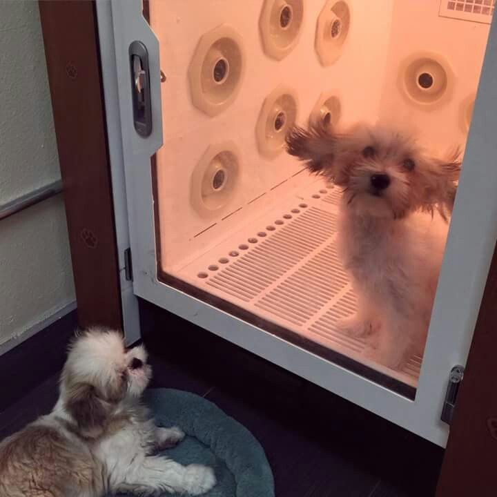 278 best kennels images on pinterest pets gardening and showers infrared aromatherapy drying cage dog grooming solutioingenieria Choice Image