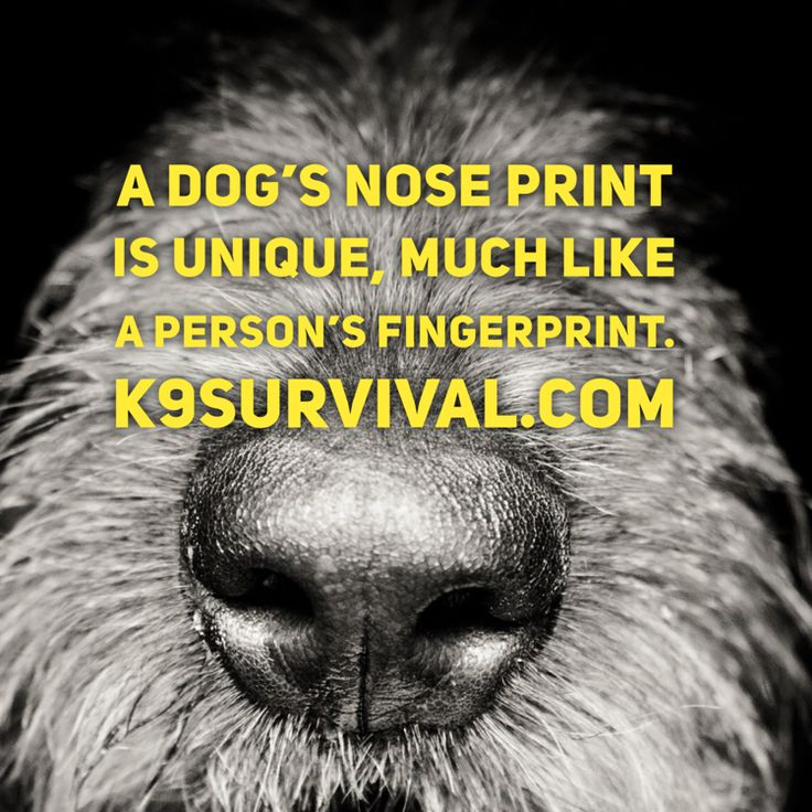 A dog's nose print is unique, much like a person's fingerprint.
