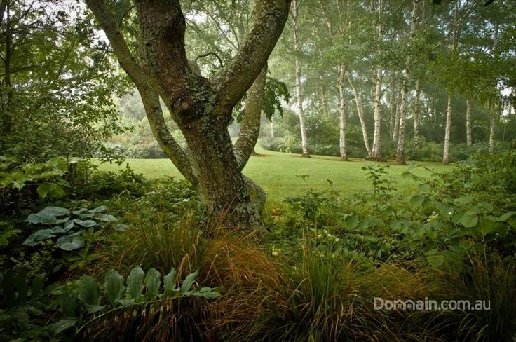 80 Den Road, Mole Creek TAS 7304   m.domain.com.au