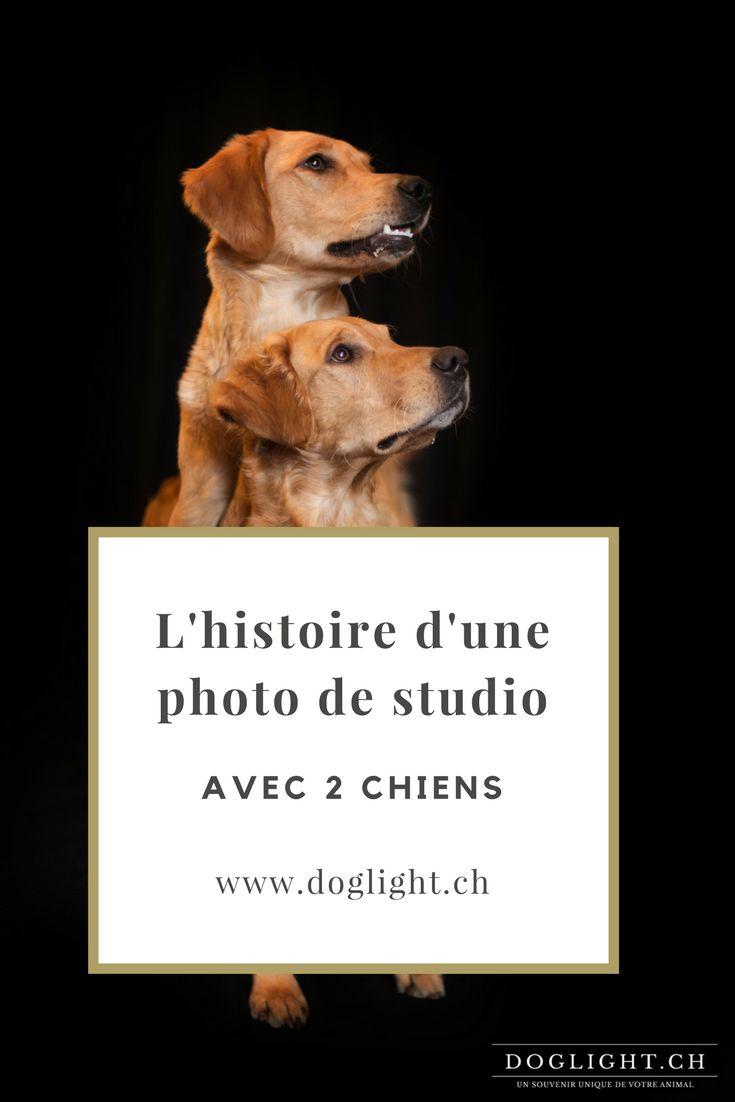 L'histoire d'une photo de studio avec mes 2 Goldens Retriever. #goldenretriever #photostudio #chiens #suisse