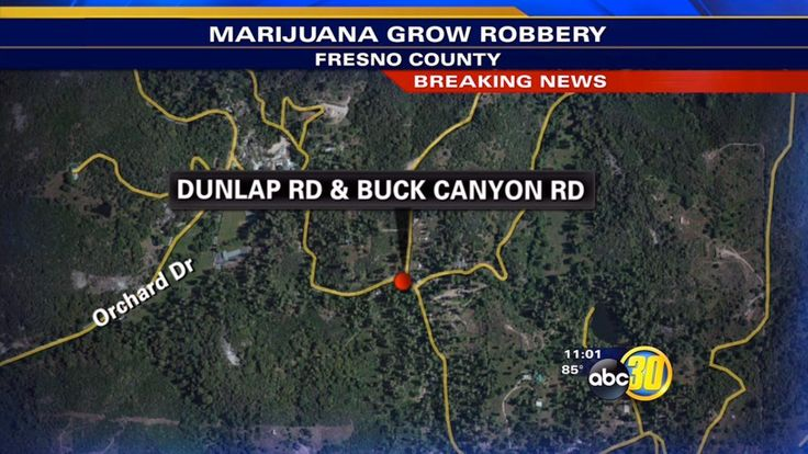 Fresno County Sheriff's deputies are on the scene of a robbery at a marijuana grow.
