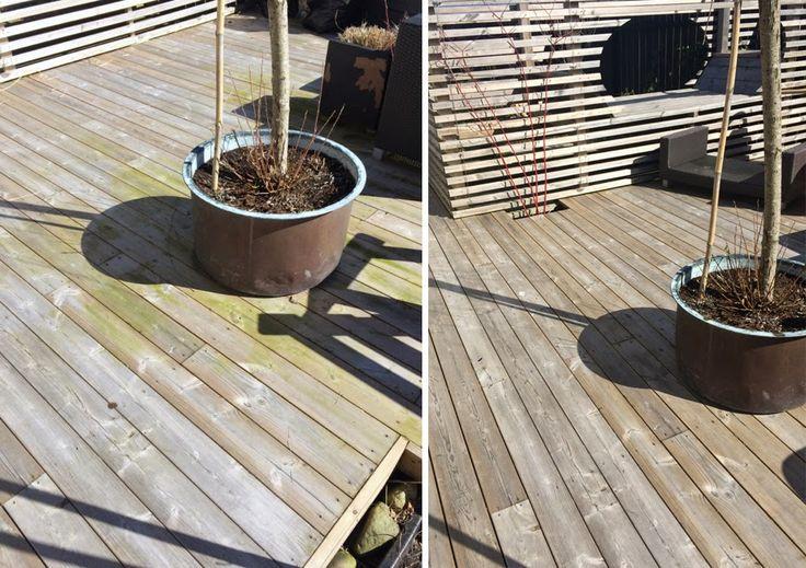 Cattis и Эйра саду дизайн: как убрать зеленые водоросли из деревянных палуб, заборов, плитки и т. д.