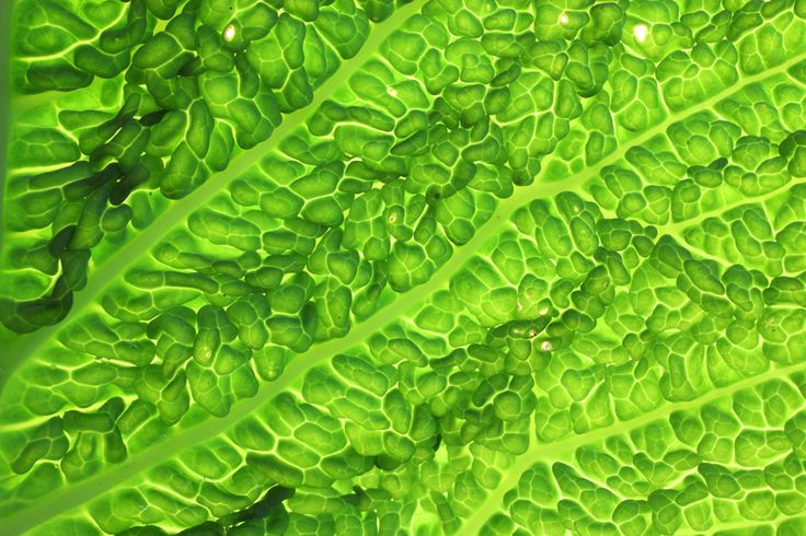 vegetable cosmos_8295  Stampa su forex formato 60x40 cm tiratura copia 1 di 10 € 100 + iva cad © Simone Durante in vendita da PhotoArt12 info: info@photoart12.com