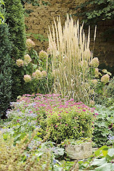 Kvetoucí vytrvalec. Tavolník japonský (Spiraea japonica) vykvetl po letním sestřihu podruhé, aby ani v říjnu záhon nepostrádal romantickou barvu.
