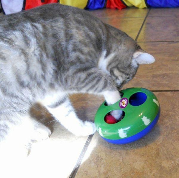 11 besten katzenspielzeug bilder auf pinterest die katze katzen spielzeug und katzenbabys. Black Bedroom Furniture Sets. Home Design Ideas