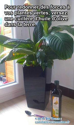 Vos plantes vertes s'affaiblissent et semblent un peu fatiguées ? Découvrez l'astuce ici : http://www.comment-economiser.fr/plantes-qui-s-affaiblissent-engrais-naturel.html?utm_content=bufferf9391&utm_medium=social&utm_source=pinterest.com&utm_campaign=buffer