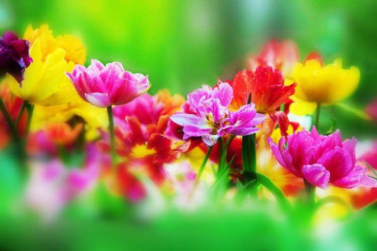 Μάρτιος: 25 παροιμίες και αποφθέγματα για τον πιο αγαπημένο μήνα του χρόνου
