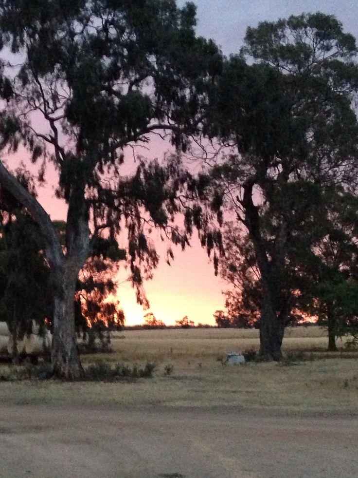 400 year old gum trees on a sheep farm - Nurmurkah - Victoria, Australia.
