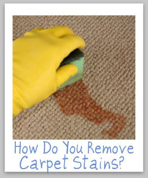 See over 35 carpet stain removal tips for all types of stains you could get on your carpet, many with videos.