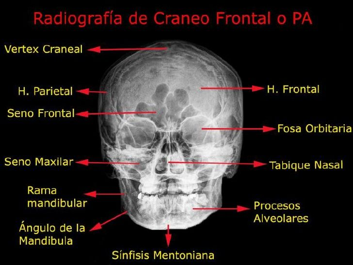 Fisioterapia anatomia humana