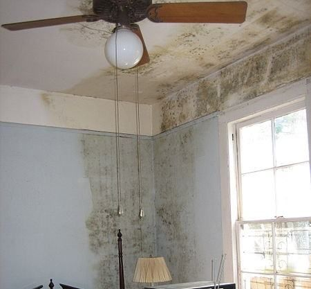 Una serie de tips para eliminar el moho hogareño y evitar sus consecuencias.