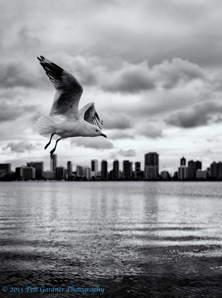 L2AS1Ac City Gull. Fozen motion bright background, exposure compensation. Nikon D810, Sigma 24mm Art Prime, 1/8000, f2.5, ISO 200. I opened up the shutter to decrease depth of field, and pushed the shutter to max so as to freeze the bird in flight without over exposing.
