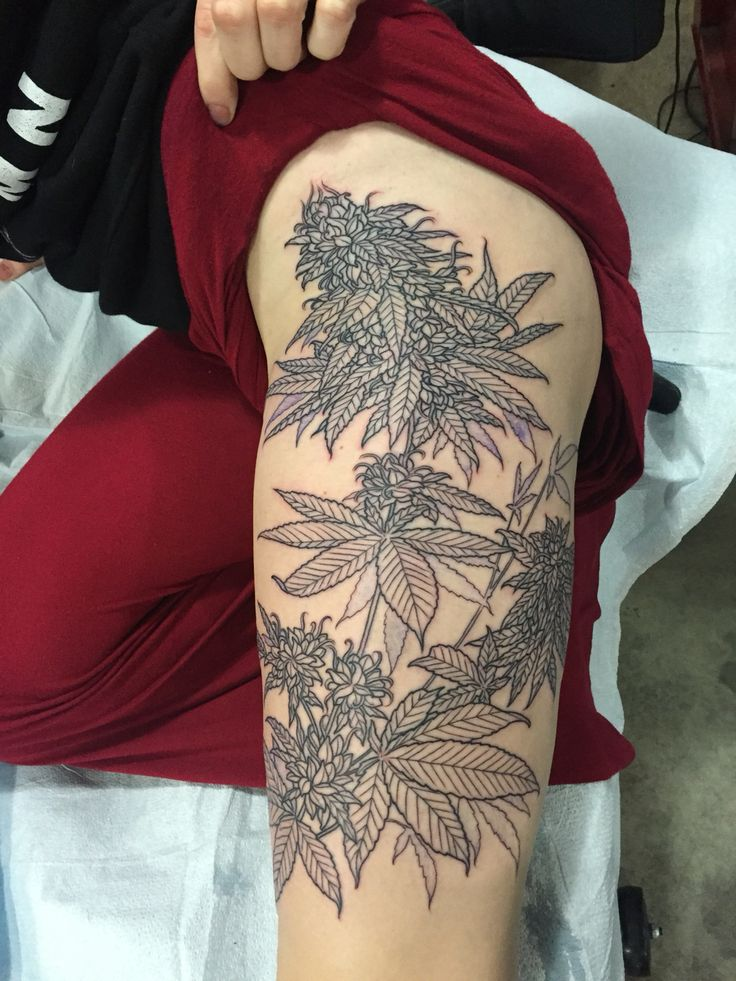 First session with the amazing Kirsten Holiday At Wonderland Tattoo in Portland Oregon. 12/23/15 Cannabis plant, floral.