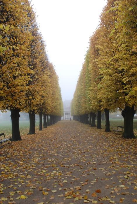 Når bladene begynder at falde, skal jeg gå en tur. Frederiksberg have er at foretrække!
