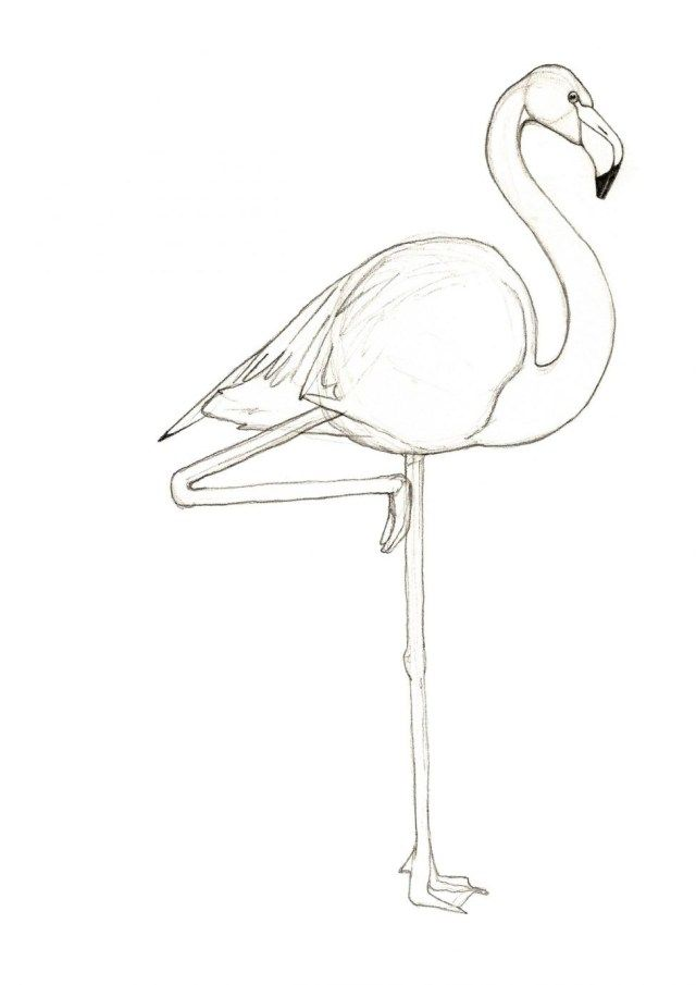 25 Inspired Picture Of Flamingo Coloring Pages Flamingo