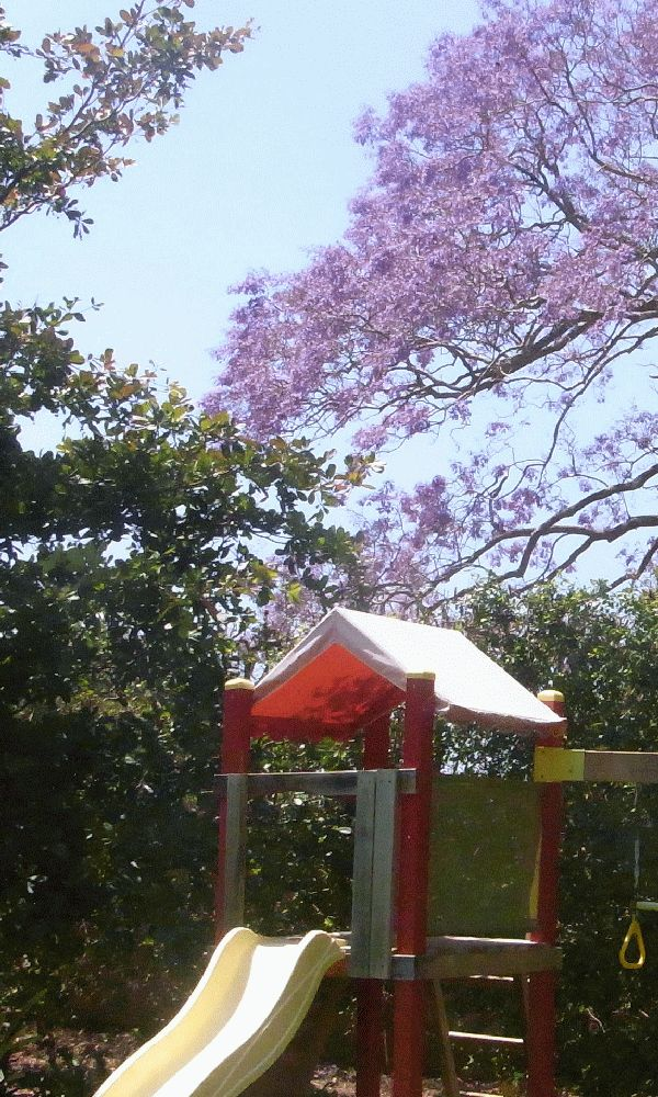 Here the beautiful blue of the Jacaranda zing with the red splash of the play equipment to add fun to the space.
