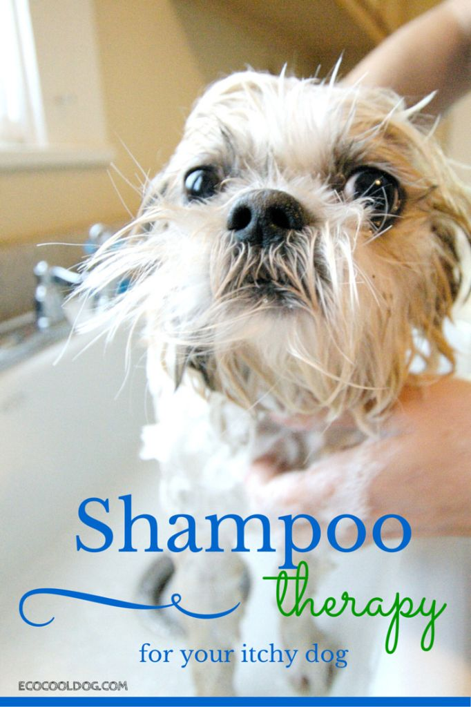 22 best dog grooming images on pinterest dog grooming dog do you have an itchy dog shampoo therapy for your itchy dog can help stop the itching eco cool dog finds solutioingenieria Image collections