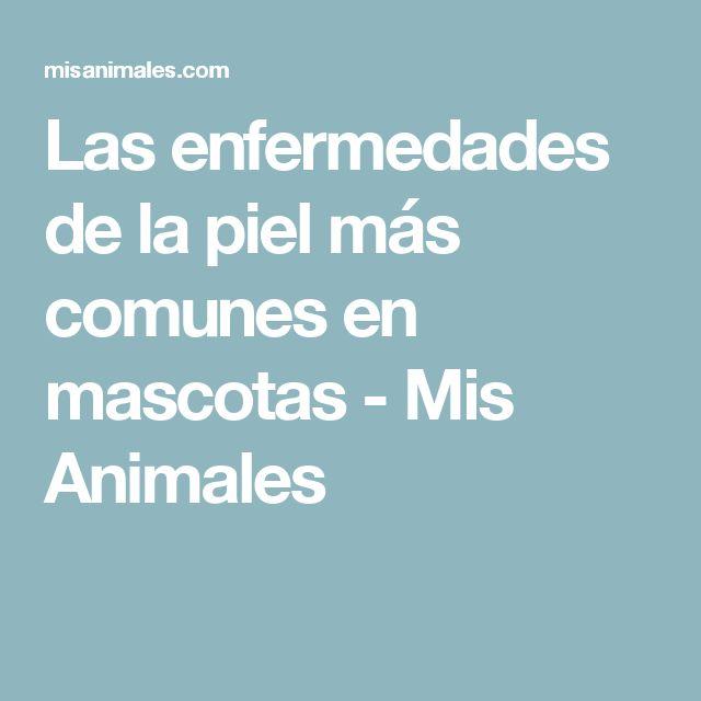 Las enfermedades de la piel más comunes en mascotas - Mis Animales