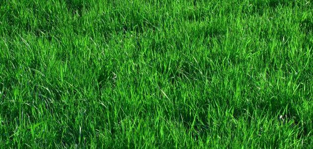 Hvordan skal jeg gøde min græsplæne?