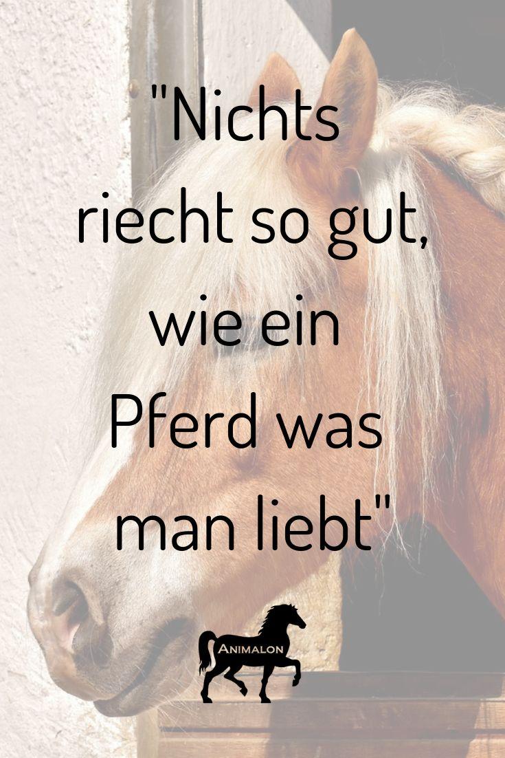Wer von euch kennt das? Finde auf unserer Webseite die besten Pferdesprüche und lass Dich inspirieren.  #pferde #pferdesrpüche #pferd #pferdeliebe