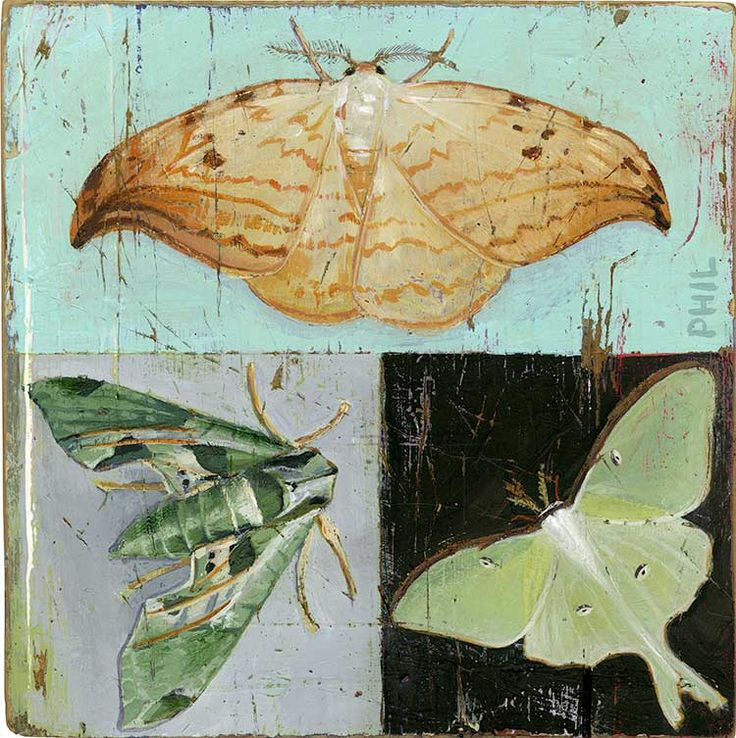 Moths. Illustration by Phil. Represented by i2i Art Inc. #i2iart